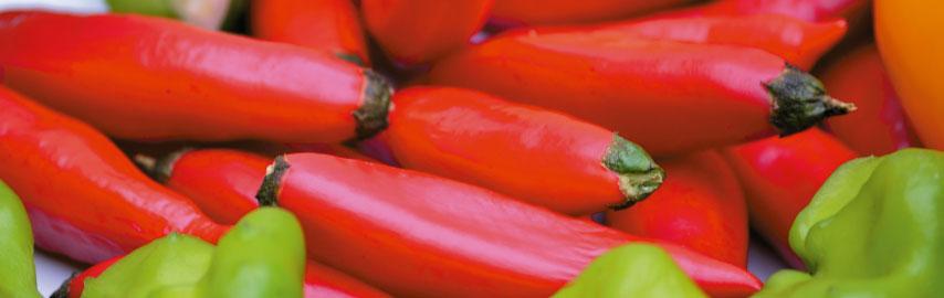 Imagem receita pimenta dedo de moça em conserva
